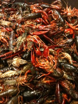 crawfish_boxing_room.jpg