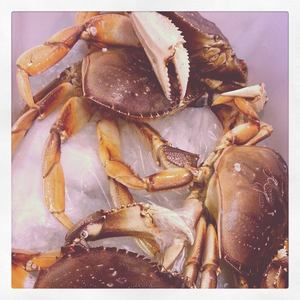 dungenesscrabs-fineandrare.jpg