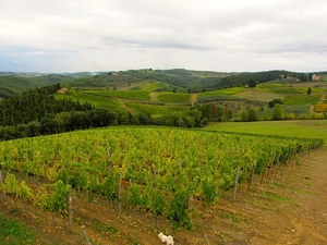 1v-monsanto-vineyard.jpg