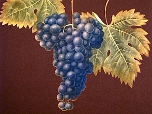grapeillustration.jpg