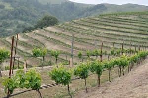 Devils_Gulch_Ranch_vineyard.jpg